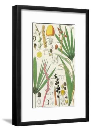 Palmea VII--Framed Art Print