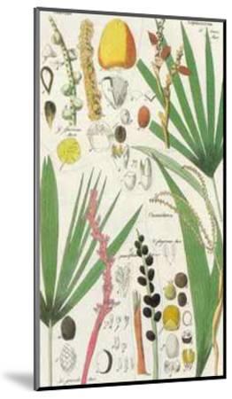 Palmea VII--Mounted Art Print