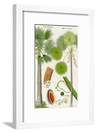 Palmea IV--Framed Art Print
