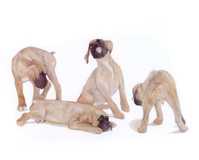 Puppies and Kittens III-D^ Patrian-Framed Art Print