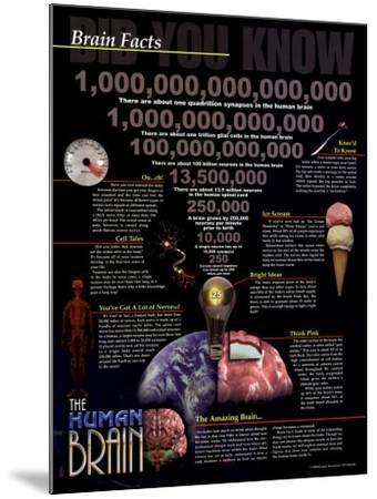 Brain Facts--Mounted Art Print