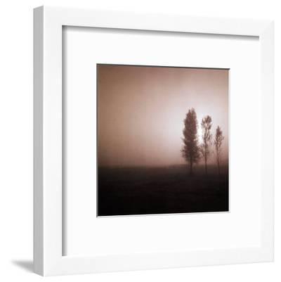 Bordeaux Trees-Richard D'Amore-Framed Art Print