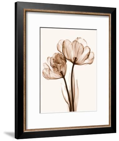 Parrot Tulips II-Steven N^ Meyers-Framed Art Print