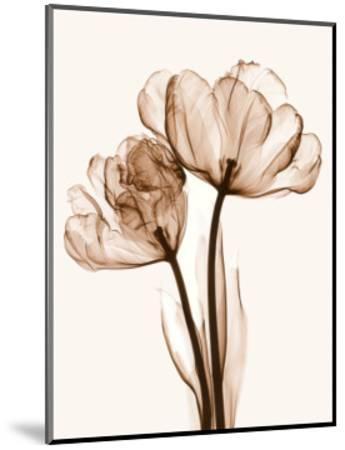 Parrot Tulips II-Steven N^ Meyers-Mounted Art Print