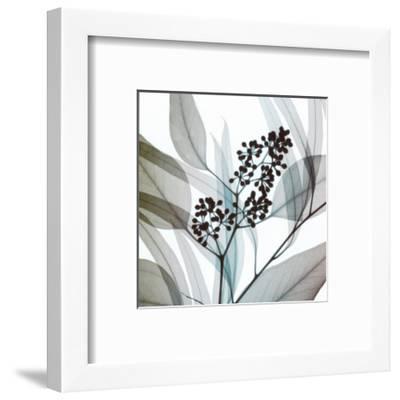 Eucalyptus-Steven N^ Meyers-Framed Art Print