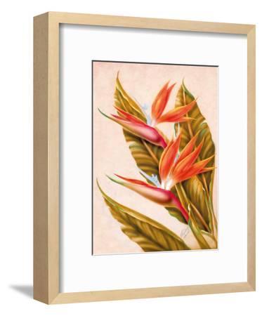 Hawaiian Bird of Paradise, c.1940s-Ted Mundorff-Framed Giclee Print