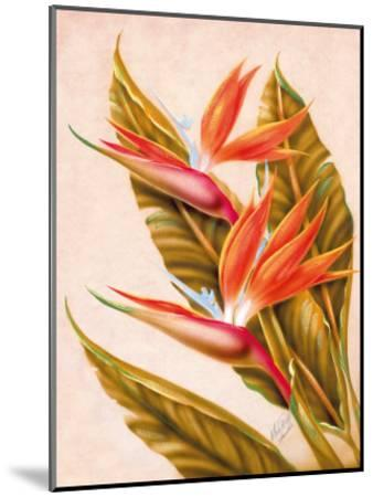 Hawaiian Bird of Paradise, c.1940s-Ted Mundorff-Mounted Giclee Print