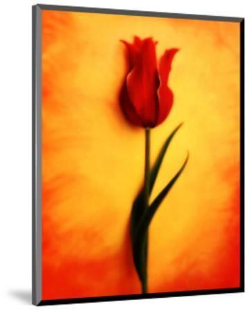 Tulip III-Christine Zalewski-Mounted Art Print