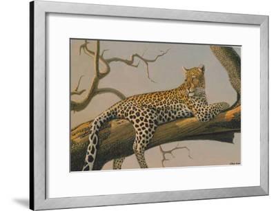 Lounging Leopard-Clive Kay-Framed Art Print