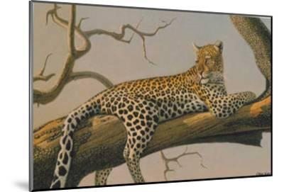 Lounging Leopard-Clive Kay-Mounted Art Print