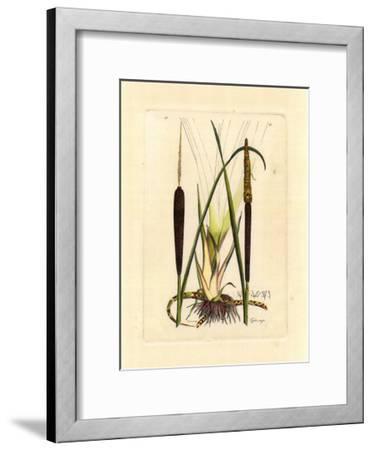 Antique Cattail I-Samuel Curtis-Framed Art Print