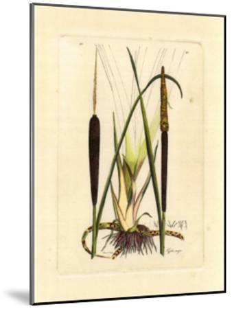 Antique Cattail I-Samuel Curtis-Mounted Art Print