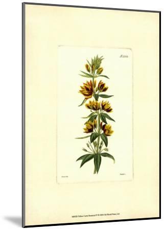 Yellow Curtis Botanical IV--Mounted Art Print