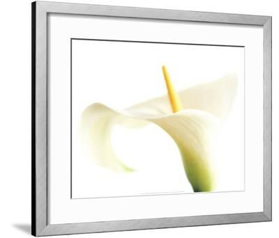 Calla on White-Den Reader-Framed Art Print