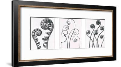 Art Forms in Nature I-Karl Blossfeldt-Framed Art Print