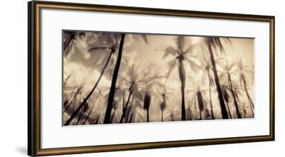 Palm Paradise-Susan Friedman-Framed Art Print