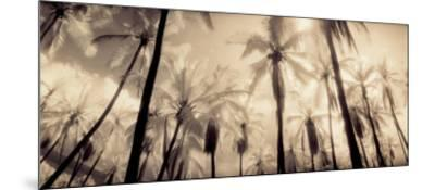 Palm Paradise-Susan Friedman-Mounted Art Print