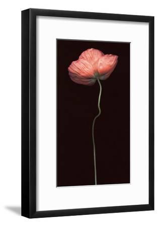 Poppy Solo-S^ G^ Rose-Framed Art Print