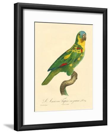 Barraband Parrot No. 89-Jacques Barraband-Framed Art Print