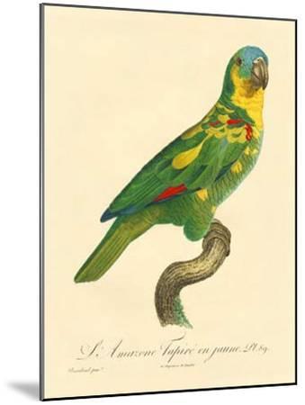 Barraband Parrot No. 89-Jacques Barraband-Mounted Art Print