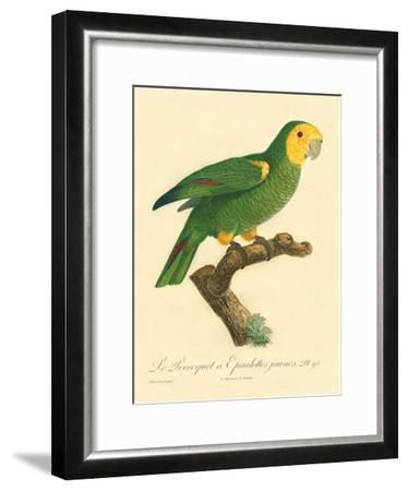 Barraband Parrot No. 98-Jacques Barraband-Framed Art Print