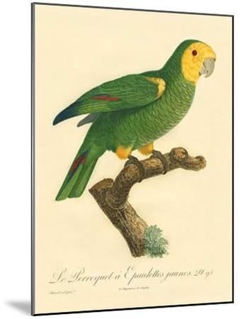 Barraband Parrot No. 98-Jacques Barraband-Mounted Art Print