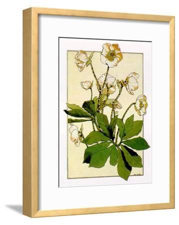 Helleborus-Anna Martin-Framed Art Print