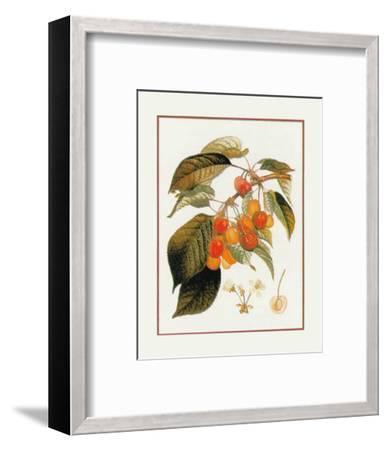 Gros Biganeau Rouge--Framed Art Print