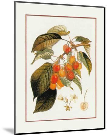 Gros Biganeau Rouge--Mounted Art Print