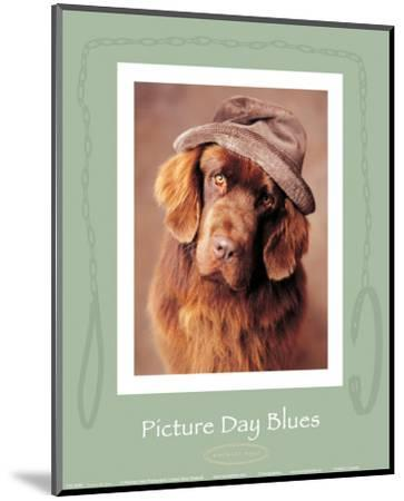 Picture Day Blues-Rachael Hale-Mounted Art Print
