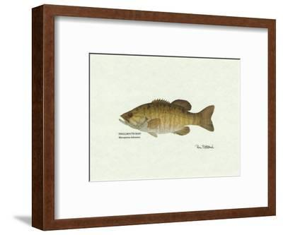 Smallmouth Bass Fish-Ron Pittard-Framed Art Print