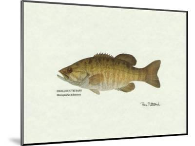Smallmouth Bass Fish-Ron Pittard-Mounted Art Print