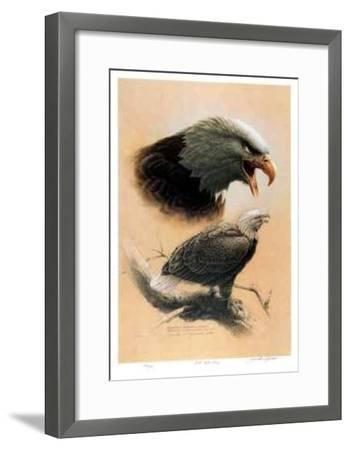 Bald Eagle Study-Michael Dumas-Framed Collectable Print