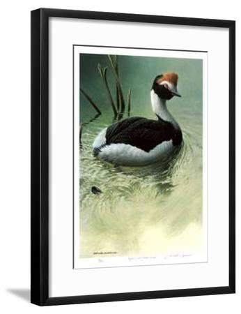 Highland Pool - Hooded Grebe-Michael Dumas-Framed Collectable Print