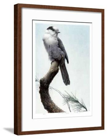 Pine Woods - Gray Jay-Michael Dumas-Framed Collectable Print