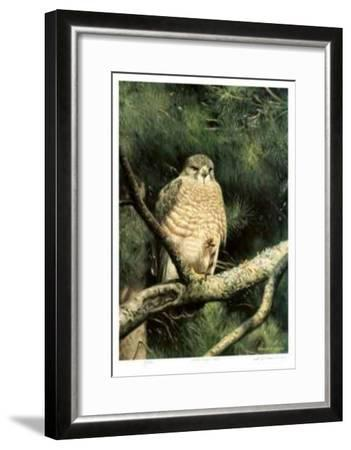 Broad Winged Hawk-Claudio D'Angelo-Framed Limited Edition