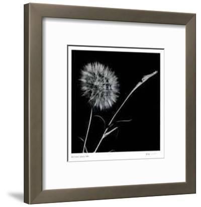 Untitled (dandylion)-Morry Katz-Framed Limited Edition