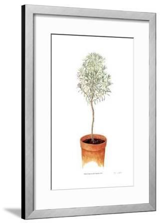 Lavender Standard-Pamela Stagg-Framed Collectable Print