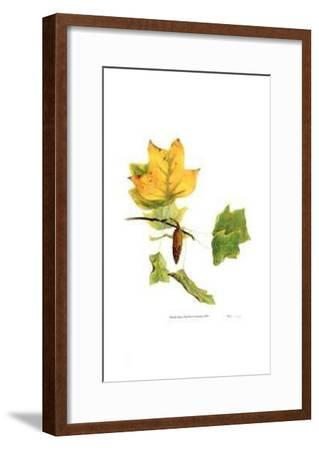 Tulip Tree in Autumn-Pamela Stagg-Framed Limited Edition