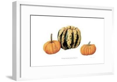 Variegata Squash & Miniature Pumpkins-Pamela Stagg-Framed Limited Edition