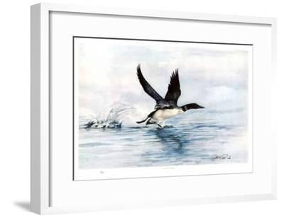 Common Loon-Robert Pow-Framed Collectable Print