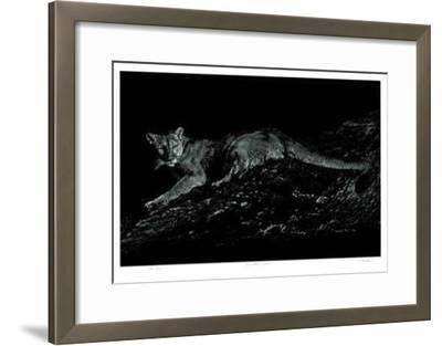 Mountain Lion-Robert Pow-Framed Limited Edition