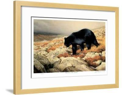 Black Bear in the Chickchocs-Claudio D'Angelo-Framed Limited Edition