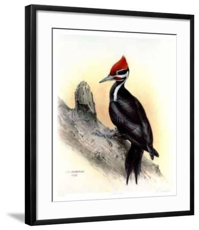 Pileated Woodpecker-James Fenwick Lansdowne-Framed Collectable Print