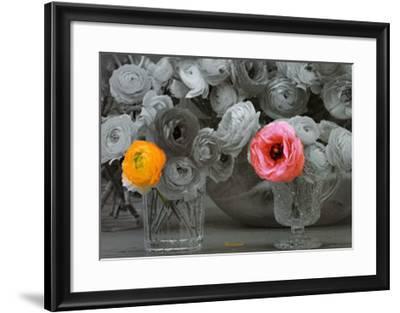 Ranunculi--Framed Art Print