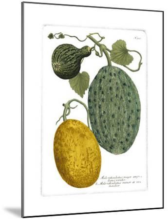 Antique Melons II-Weimann-Mounted Art Print