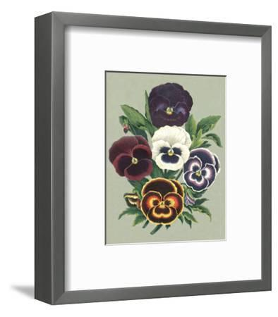 Tricolor Pansies I--Framed Art Print