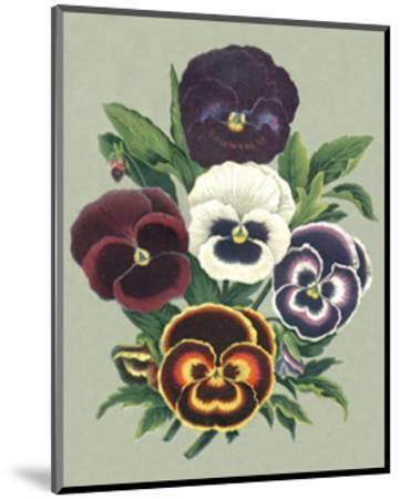 Tricolor Pansies I--Mounted Art Print