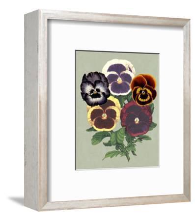 Tricolor Pansies II--Framed Art Print