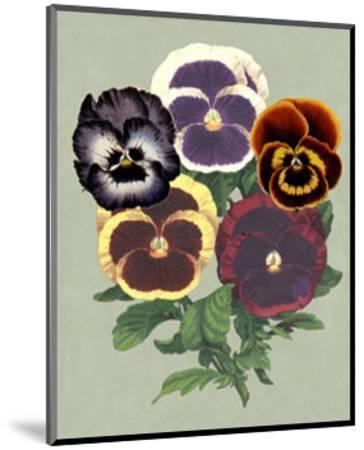 Tricolor Pansies II--Mounted Art Print